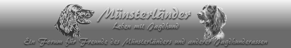 Muensterlaender-Jagdhund